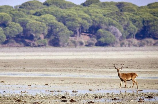 Private Day Trip from Seville: Doñana ...