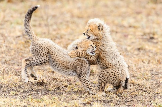 De Wildt Endangered Wildlife Center