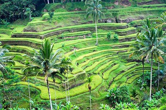 Tour privato di un giorno a Ubud