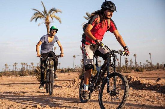 Full-Day Biking in the Palmgrove...
