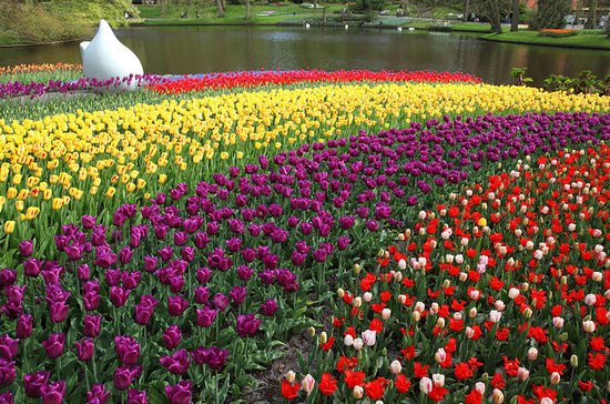 Keukenhof and Delft Tour from Brussels