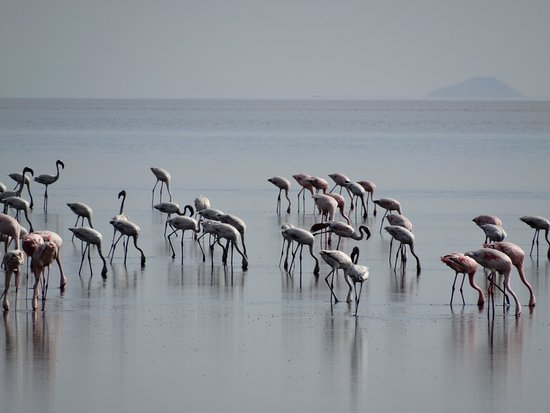 Lake Natron Photo