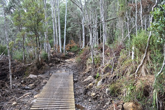 Maydena, Australia: Rocky terrain trail