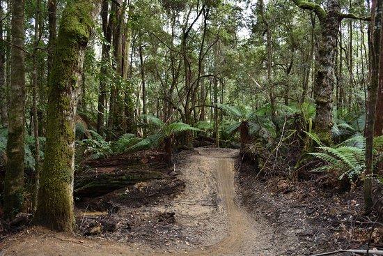 Maydena, Australia: Trail love pic