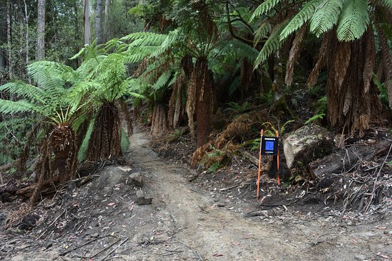 Maydena, Австралия: More trail love