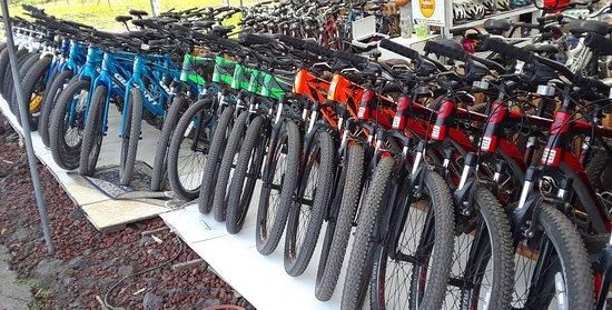 Pahoa, HI: Bikes galore
