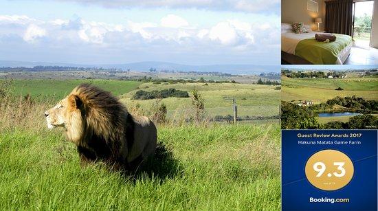 Great Brak River, Sydafrika: Our male lion, Jabu, accommodation available