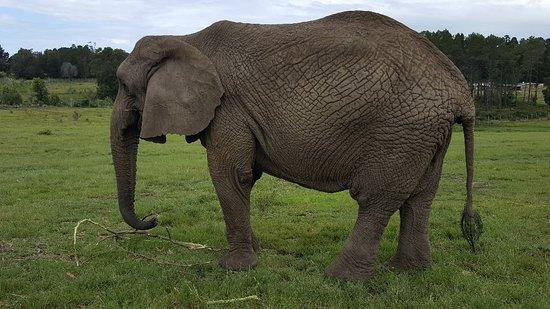 Knysna Elephant Park: 20180224_144519_large.jpg