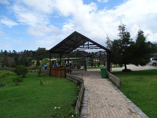 Knysna Elephant Park: DSC00298_large.jpg