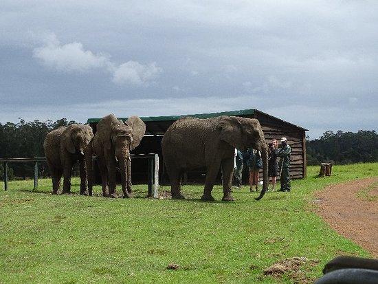 Knysna Elephant Park: DSC00259_large.jpg
