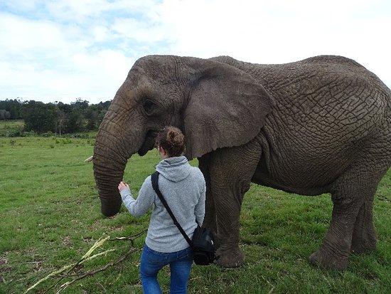Knysna Elephant Park: DSC00283_large.jpg
