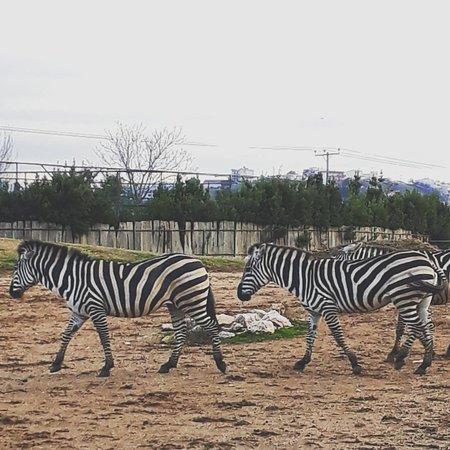 Спата, Греция: Αττικό Ζωολογικό Πάρκο