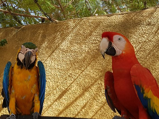 L'Elevage d'Oiseaux Exotique