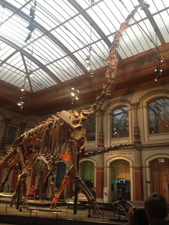 Museum fur Naturkunde (Natural History Museum): #FelixTravelers #Alemania #Berlín #NaturalHistoryMuseum