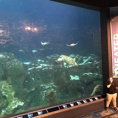 Adventure Aquarium: photo0.jpg