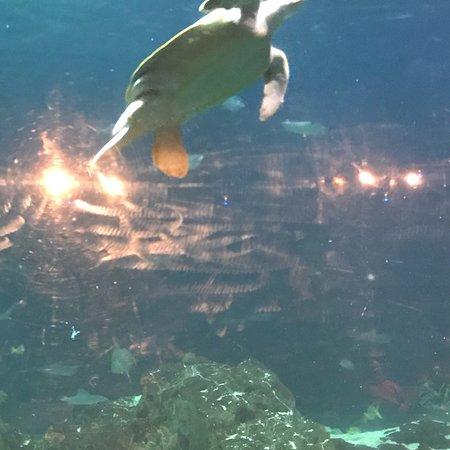 Adventure Aquarium: photo1.jpg