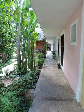 Casa Tia Micha: Allée qui conduit aux chambres