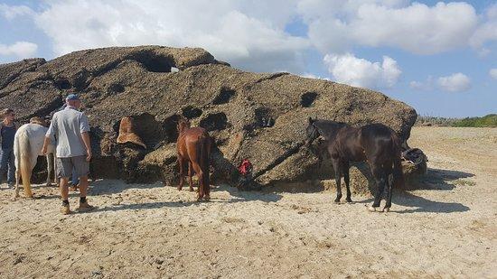 Rancho Washikemba horse ranch Bonaire: 20180304_093531_large.jpg
