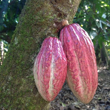 El Sendero del Cacao: photo6.jpg