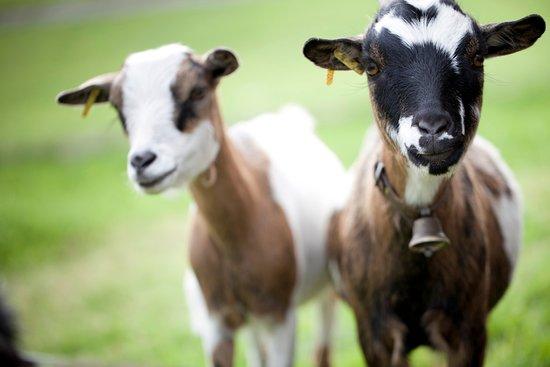 Sorenberg, Switzerland: Kleintiergehege und Spielplatz im Sommer