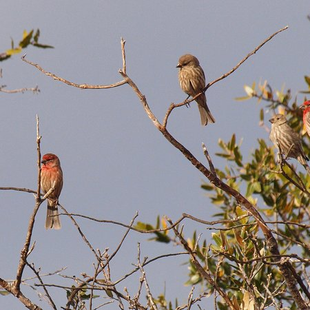 Chihuahuan Desert Nature Center & Botanical Garden: Great bird blind for morning light photography.