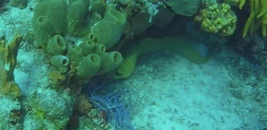 Blue Magic Scuba : Eel