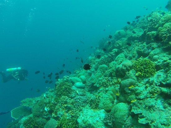 Siladen Island照片