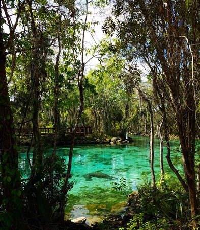 Three Sisters Springs : IMG_20180308_194958_767_large.jpg