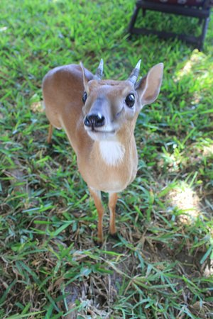 Cinco Portas: il simpatico animale da compagnia