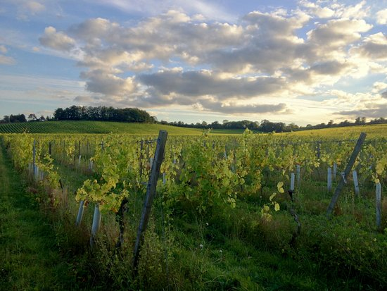 Grape and Grain Tours - Surrey Tours