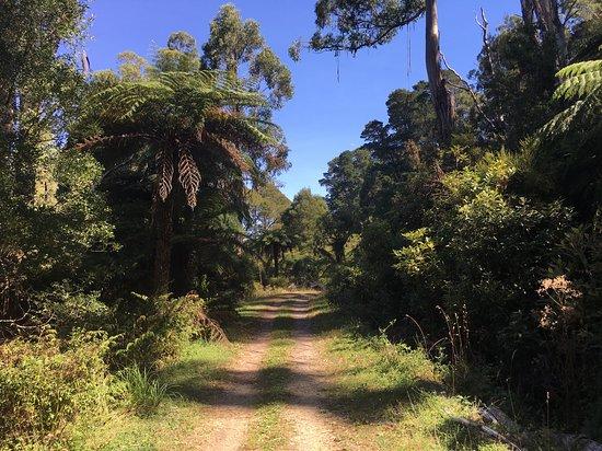O'Shannassy Trail