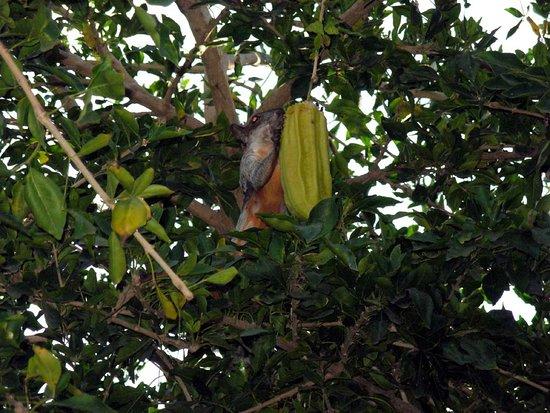 Hotel Rincon del Pacifico: Белка на дереве