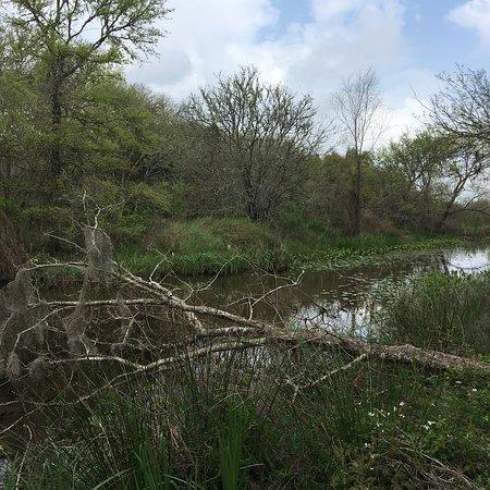 Brazoria, TX: photo5.jpg