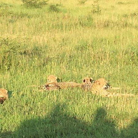 Phinda Private Game Reserve, Afrika Selatan: photo0.jpg