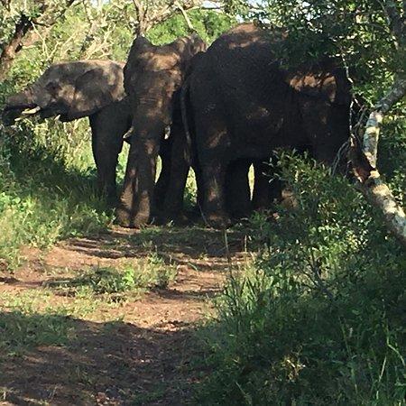 Phinda Private Game Reserve, Afrika Selatan: photo1.jpg