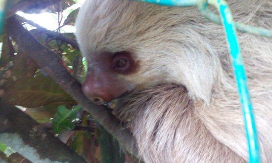 Punta Uva, Costa Rica: Bamboocha