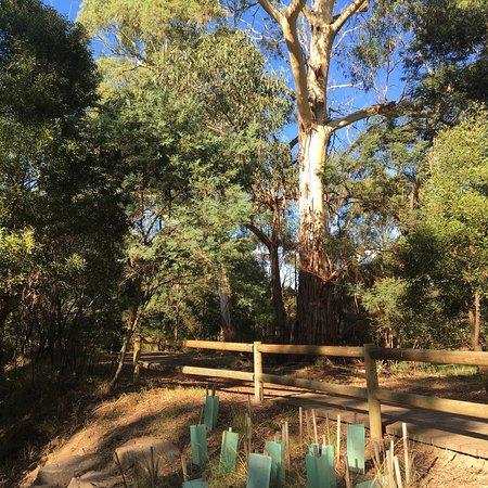 Beaconsfield Flora & Fauna Reserve