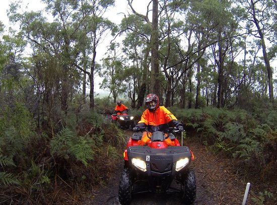 Bridport, Australien: bush tracks