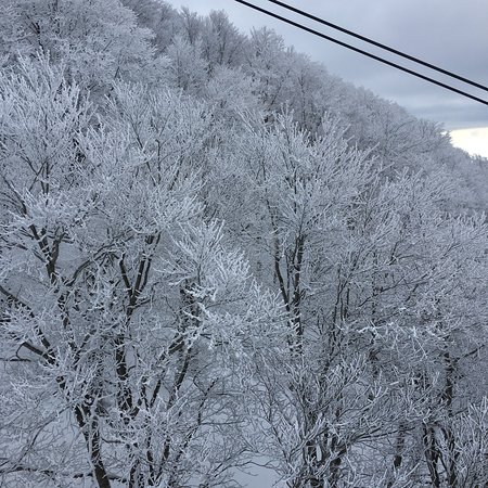 Frost Covered Trees of Zao: photo5.jpg