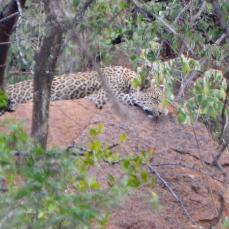 Pilanesberg National Park, África do Sul: photo1.jpg