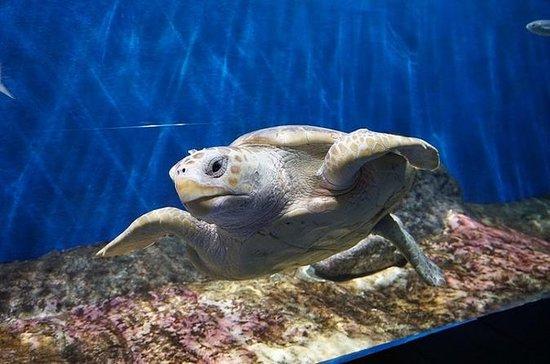 Billet d'entrée à l'aquarium de...