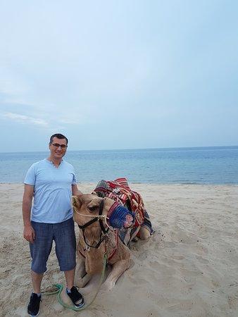 Sealine Beach Resort Beach Road Cherai Kochi Kerala