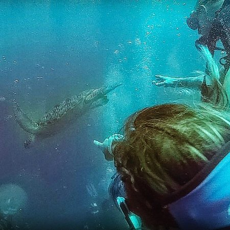 Picture of manta dive gili air gili air tripadvisor - Gili air manta dive ...