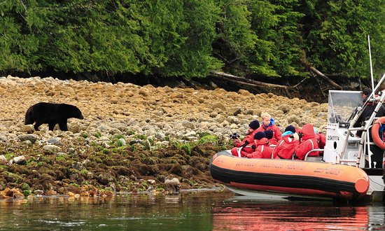 Clayoquot Wilderness Resort : Whale & Bear Watching Adventure