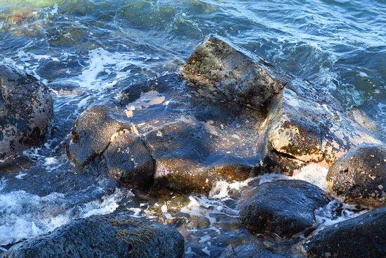 Foto de Lahaina Harbor