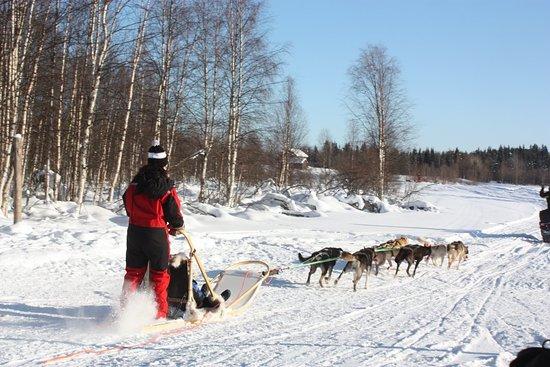 Savukoski, Finlandia: IMG_8359_large.jpg