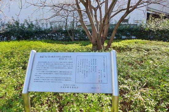 Hazenoki Tree of Chisai Aki Mitsuketa