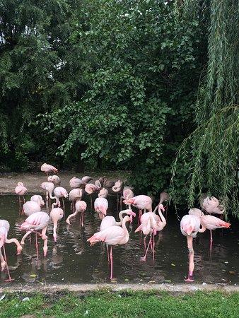 Zoo Praha: photo0.jpg