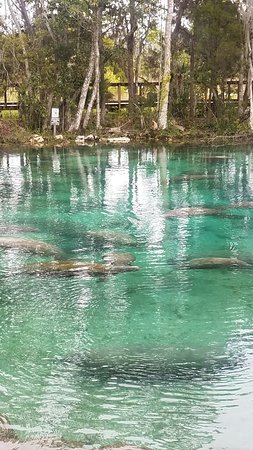 Three Sisters Springs : 20180310_132042_large.jpg