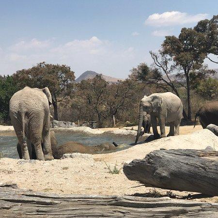 photo2 jpg picture of africam safari, puebla tripadvisor